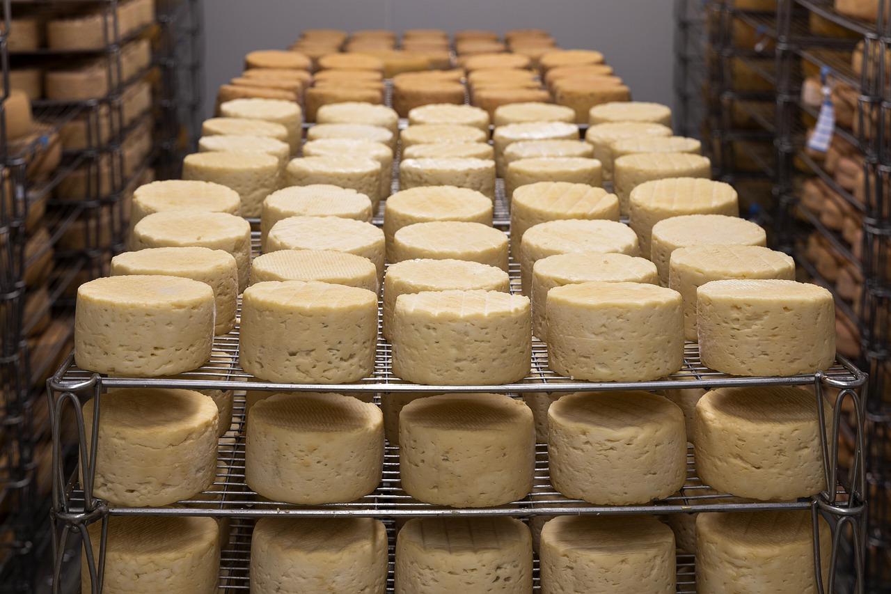 Manufactured cheese on metal racks