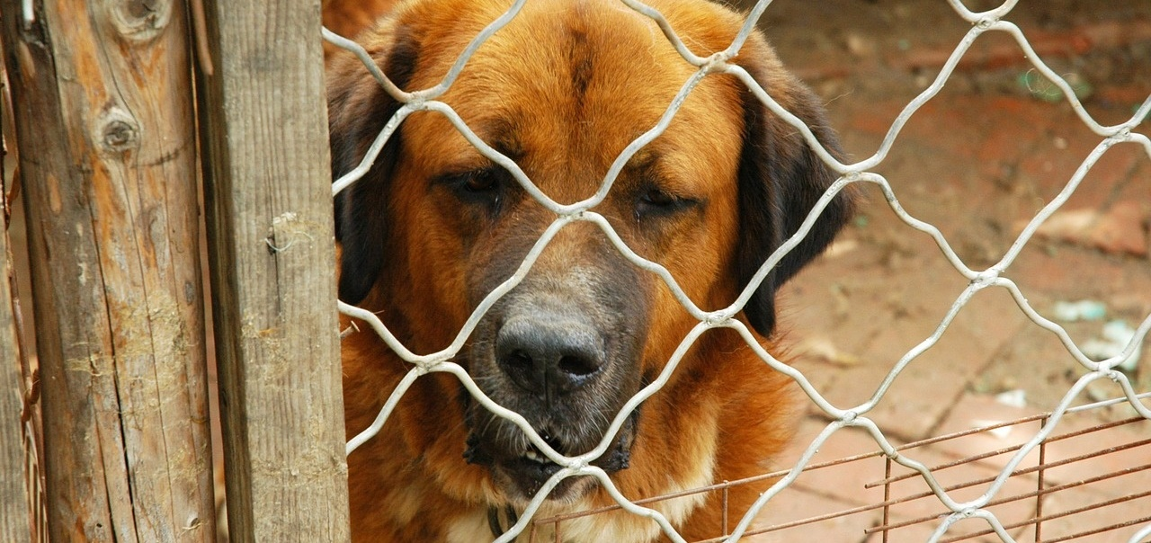 Unhappy Dog in a Kennel